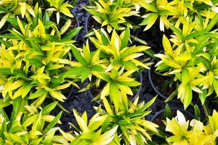 lettle verde hoja de la planta