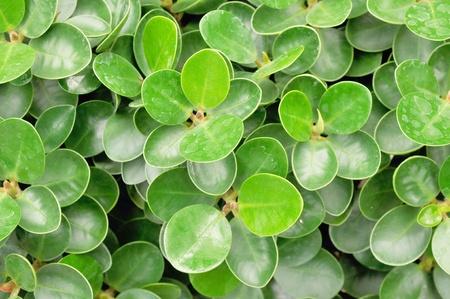 lettle green leaf
