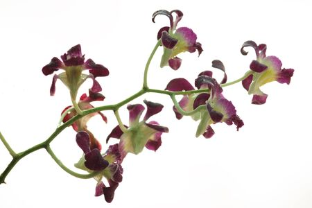 beautiful orchid plant Stock Photo