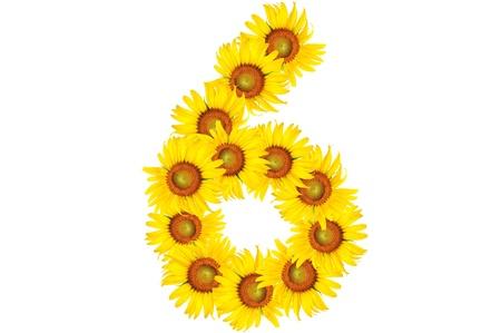 beautiful sunflower alphabet number six Stock Photo
