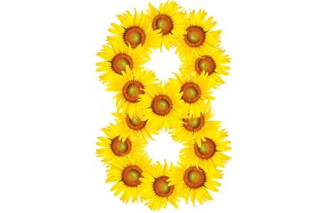 beautiful sunflower alphabet number eight photo