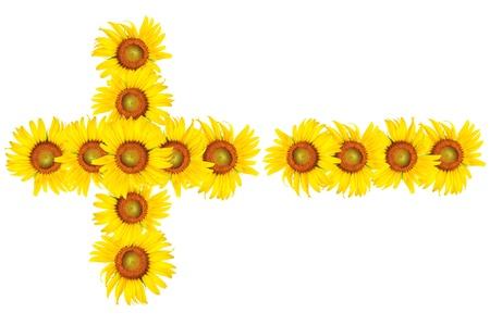 sunflower plus and minus on white background Stock Photo
