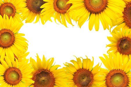 beautiful sunflower frame Stock Photo