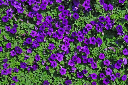 purple plant and green leaf top view