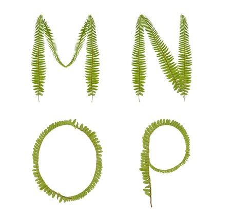 Hermoso �rbol de helecho alfabeto letra may�scula mp Foto de archivo