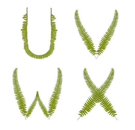 Beautiful Tree fern alphabet capital letter u-x