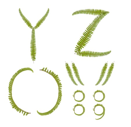 Beautiful Tree fern alphabet capital letter y-z  Stock Photo