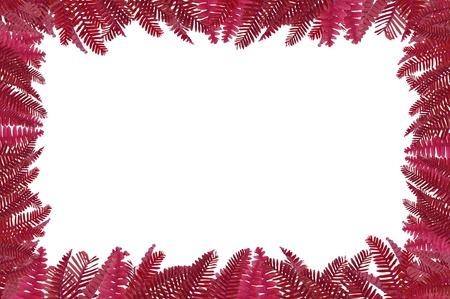 green fern frame  Stock Photo