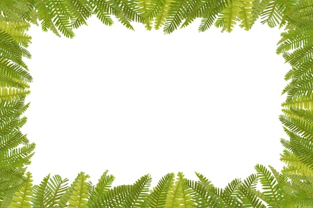marco de helecho verde  Foto de archivo