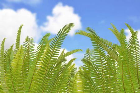 fern leaf on clear sky