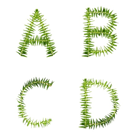 Beautiful Tree fern alphabet capital letter a-d, create from real fern tree Stock Photo