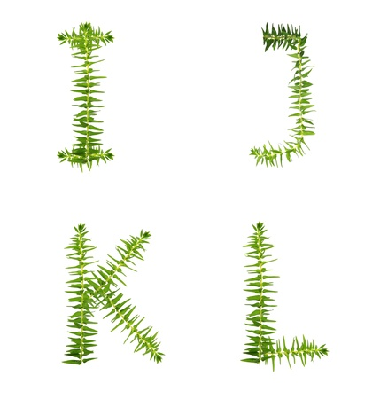 Beautiful Tree fern alphabet capital letter i-l, create from real fern tree photo