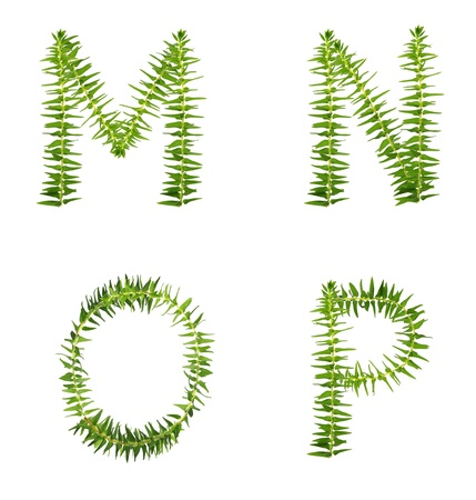 Beautiful Tree fern alphabet capital letter m-p, create from real fern tree