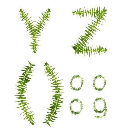 Beautiful Tree fern alphabet capital letter y-z, create from real fern tree
