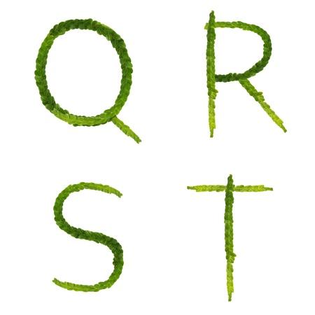 Beautiful Tree fern alphabet capital letter q-t, create from real fern tree