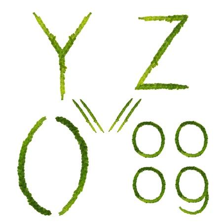 Beautiful Tree fern alphabet capital letter y-z, create from real fern tree Stock Photo - 10845445