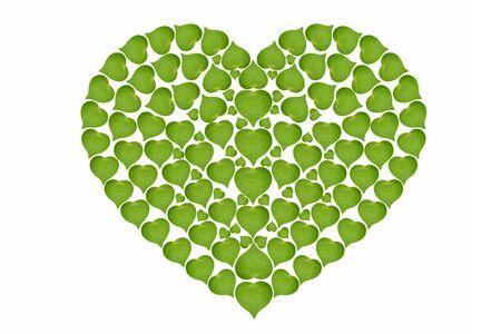 coraz�n de las hojas verdes de alta resoluci�n firme, el concepto de ecolog�a, aisladas sobre fondo blanco Foto de archivo