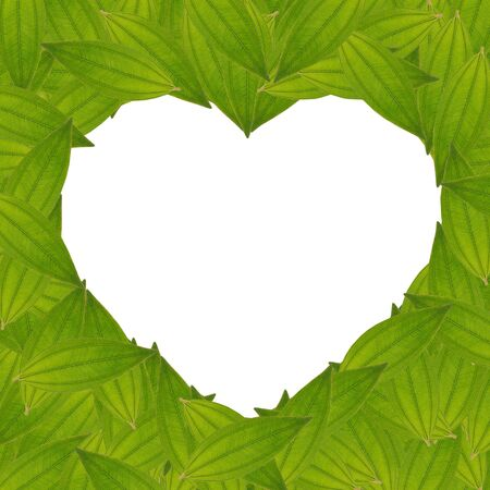 heart sign frame from green leaves, isolated, white background, create from real leaf, green concept, ecology concept