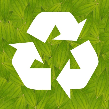 recycle sign frame from green leaf, isolated, white background, create from real leaf, green concept, ecology concept  Stock Photo
