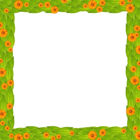 green leaves frame with flower, create from real leaf