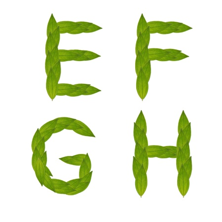 beautiful green leaf tree alphabet set e-f, green concept make from real leaf Stock Photo