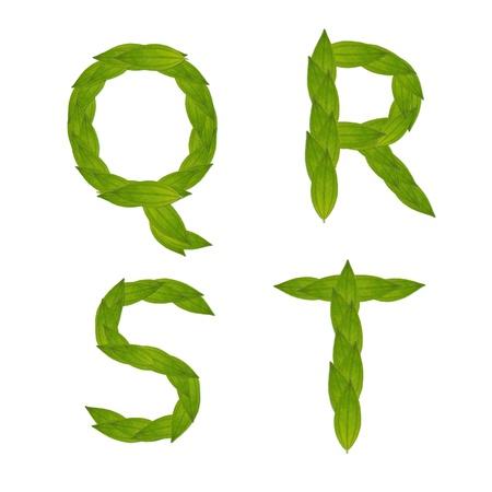 hermoso �rbol de hoja verde alfabeto conjunto qt, concepto verde hacen de la hoja verdadera