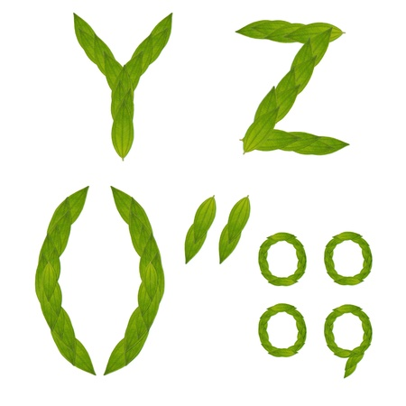 beautiful green leaf tree alphabet set y-z, green concept make from real leaf