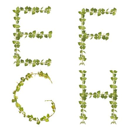 beautiful Heart tree Alphabet e-h set, make from real leaf