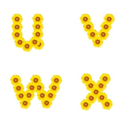 Alfabeto Hermoso girasol amarillo, aislado ux Foto de archivo