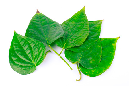 Betel leaves are medicinal plants Stock Photo