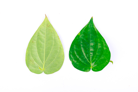 betelnut: Front and rear of the betel leaf