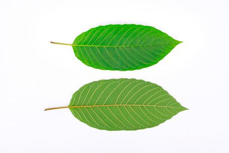 depressant: Kratom leaf (Mitragyna speciosa), a plant of the madder family used as a habitforming drug