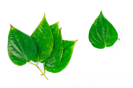 betel leaf is herbal plant on white background isolated Stock Photo