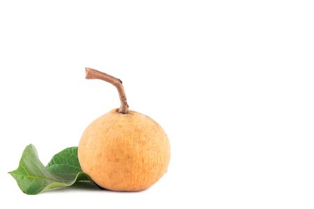 ripe santol fruits and green santol leaf  on white background planting agriculture food isolated