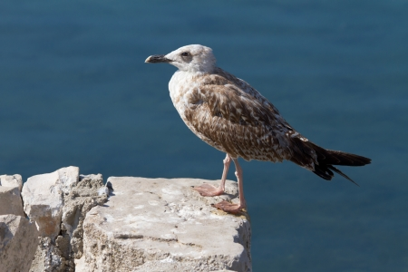Seagull standing on the rock Stock Photo