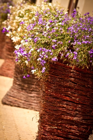Willow flower pots with tiny flowers standing outdoor photo