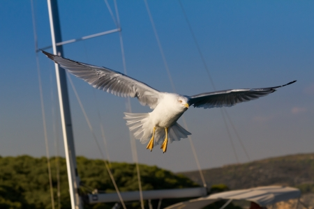 Seagull flying against the yacht and blue sky photo