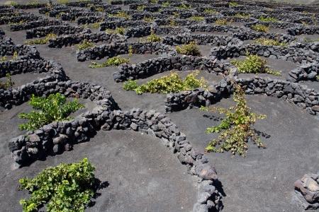 ingenuity: Vinery region La Geria Lanzarote island Stock Photo