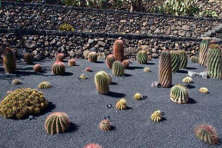 Jardin de Cactus at Lanzarote island Stock Photo