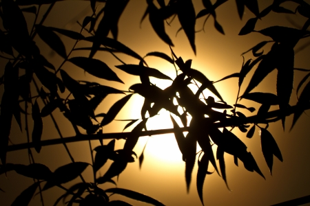Myserious leaves at night photo