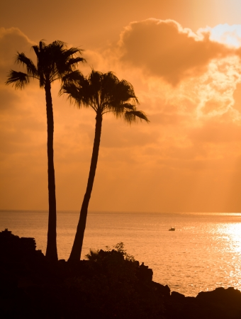 Sunset with palm trees photo
