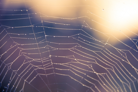 cobweb: Spiderweb cobweb at sunrise