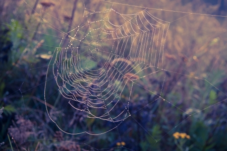 Spiderweb cobweb at sunrise