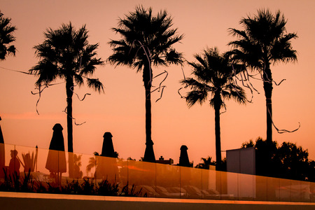 Moody sunset at a hotel with palm silhouettes