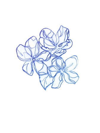pastiche: Spring flowers. Line art. Drawing with copying pencil. Stock Photo