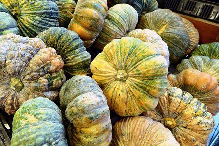 pumkin: Group of pumkin in the market