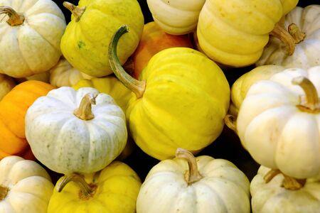 pumkin: Small pumkin, white and yellow pumkin, fancy pumkin