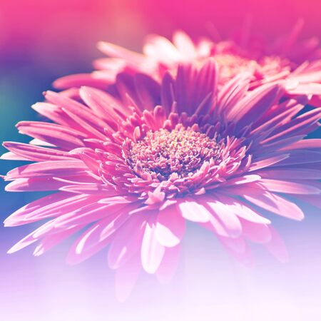 colorize: Flowers Background Bright Field Effect, Vintage Style Photo Stock Photo