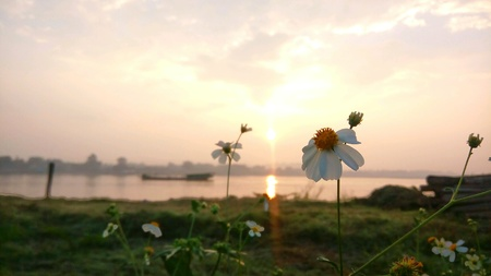 windflower: Windflower in sunrise time at Maekhong river Thailand Stock Photo