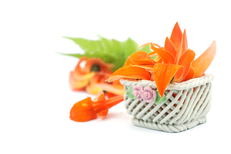 bastard: Petals of Bastard Teak Flower in ceramic basket on white background. Stock Photo